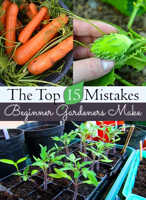Top 15 Mistakes Gardeners Make