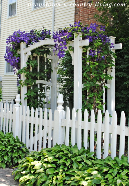 Charming Arbor with Clematis