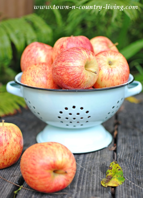 Organic Gala Apples - Baked Apple Chips Recipe