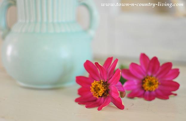 Deep Pink Zinnias