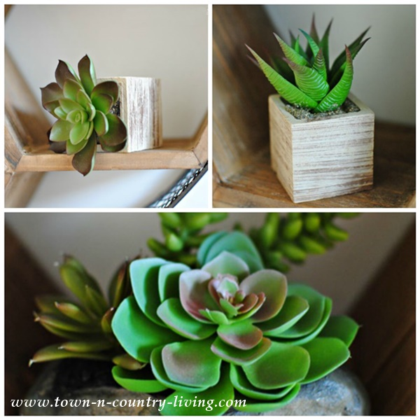 Succulents as Home Decor