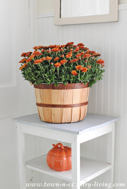Basket of Mums in Farmhouse Kitchen