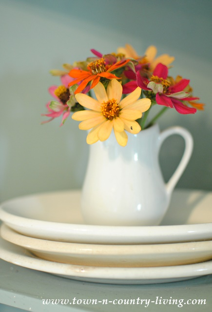 Zinnias in White Ironstone Mini Pitcher